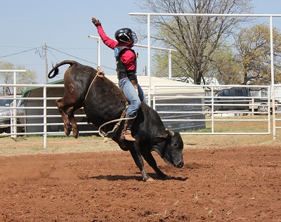 school-chalao-bull-riding-intro1 image