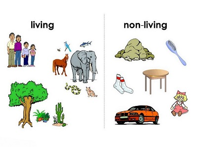 school-chalao-living and non living things image1
