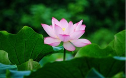 school-chalao-lotus image1