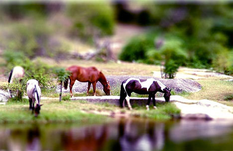 schoolchalao-tilt-shift-photography